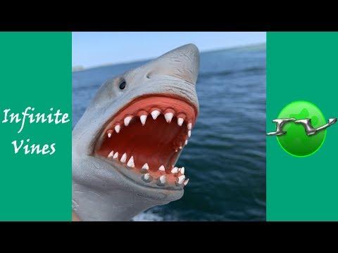 Funniest SHARK PUPPET Vines Compilation And Instagram Videos 2019