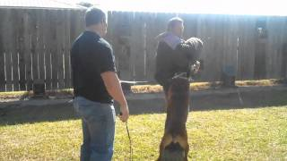 Us K9 Unlimited Dog Training Academy Rocco .mp4