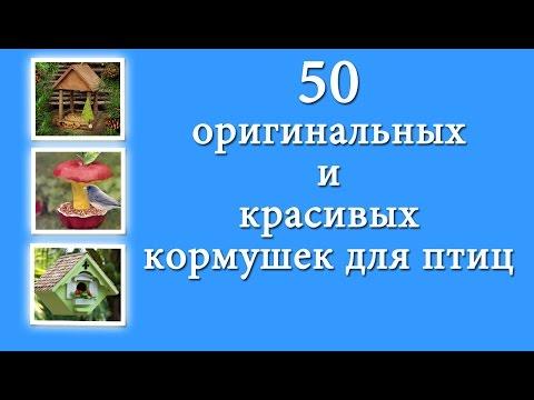 50 красивых, простых и оригинальных кормушек для птиц