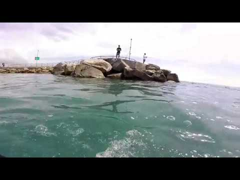 Jupiter Inlet Fishing Point Snorkeling FL, Shark, Crab, Fish