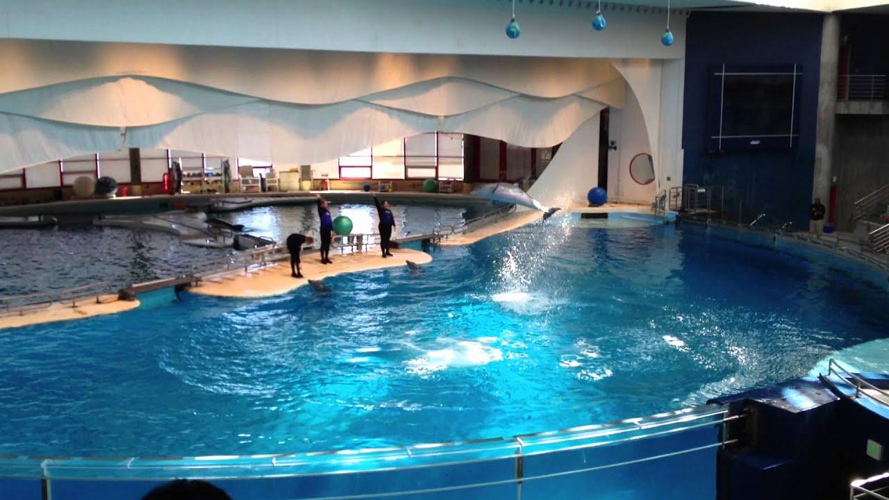 National Aquarium Baltimore Dolphin Show Prt 2 Youtube