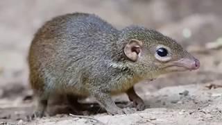 Cambodian Animal | Cambodia wildlife | Khmer Wildlife