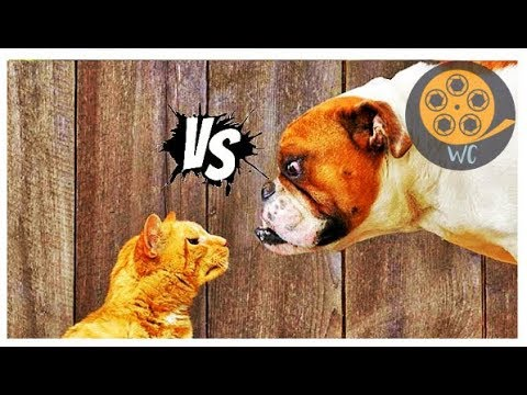 DOGS vs CATS ! Whose Side Are You On??