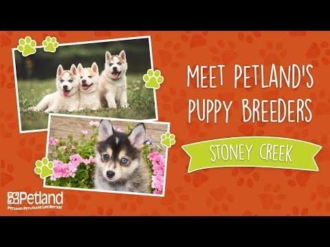 Everything Puppies - Petland Breeder Vlog Stoney Creek Kennel (2019)