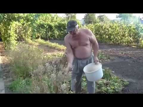 Семена кресс салата