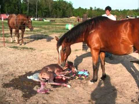 what is the average lifespan of a horse