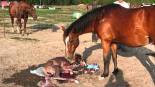 The Lifecycle of a Horse.wmv