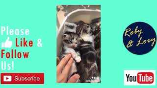 Cute Baby Cat Been Tickled Meowing Funny Video