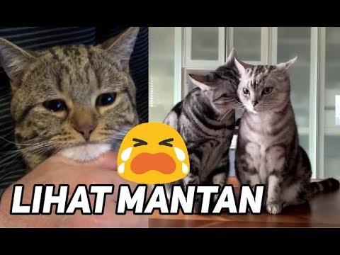Download 80+  Gambar Meme Kucing Sedih Terbaru