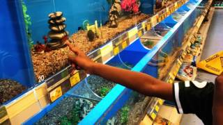 Pet fish shopping