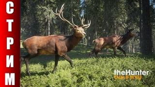 СТРИМ theHunter: Call of the Wild - Теперь я охотник