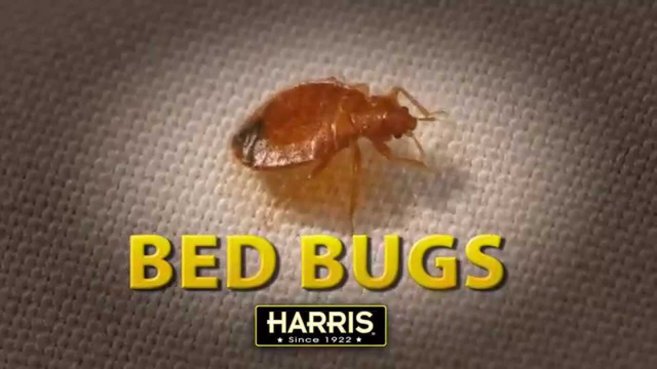 harris bed bug kit for sale online & spartanburg: buy harris bed