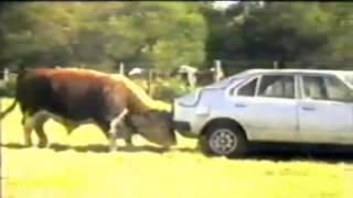 Смотреть всем!!!Видео прикол корова и машина!!!(Готовы ли вы посетить удивительный мир авто? Узнать настолько вам нравиться авто тема? И сколько вы готовы..., 2015-04-30T12:51:20.000Z)