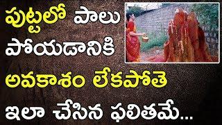 Naga panchami and nagula chavithi benefits | what to do on naga panchami and nagula chavithi