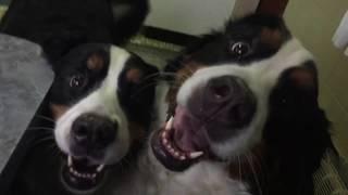3 Dogs & A Vlog - VEDA 4/29/18