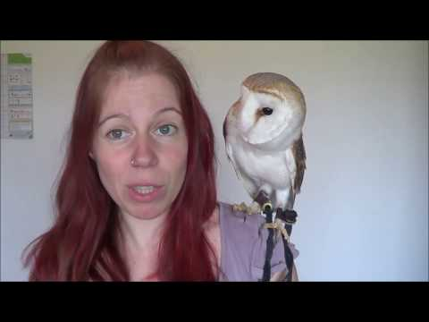 Basics Of Owning An Owl