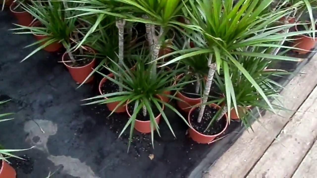 Кашпо с автополивом💧 для комнатных растений 🌻 - YouTube