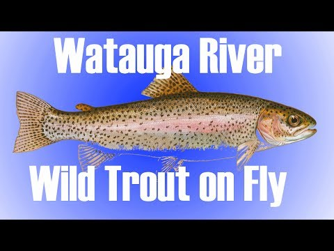 NC Fly Fishing - Watauga Wild Trout On Fly - Must See