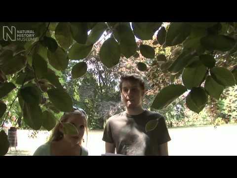 Urban tree survey | Natural History Museum