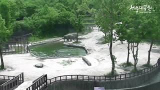 서울대공원 아기코끼리