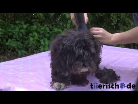 Oster PowerPro Schermaschine - Hund scheren