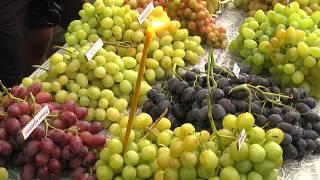 Золотая гроздь винограда 2017 - Крым