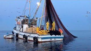Hogyan készül? A halkonzerv / Éjszakai halászat a tengeren