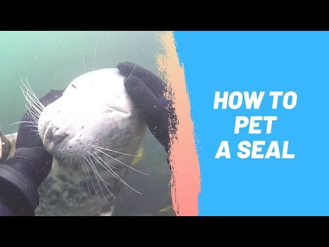 How to Pet a Seal
