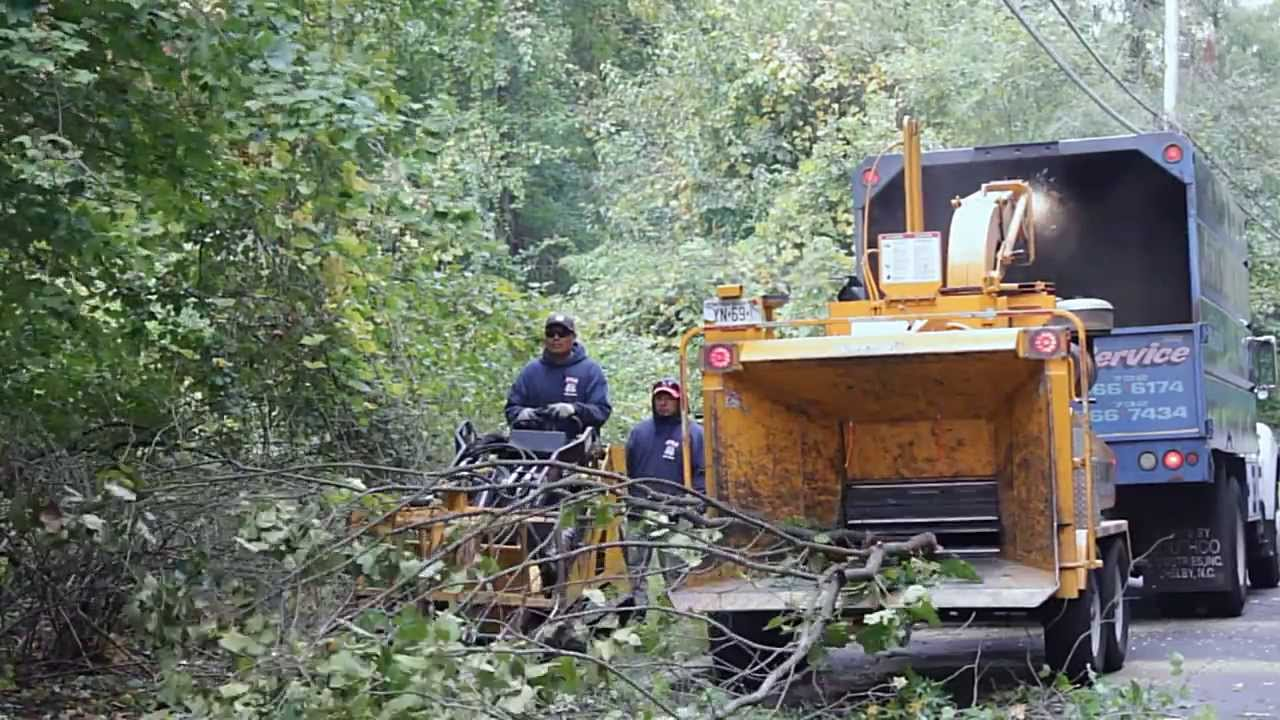 JR Tree Service & JR Tree Service - YouTube