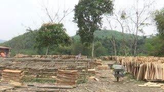 Thực hiện nghị quyết: Bắc Cạn cải thiện chất lượng rừng sản xuất