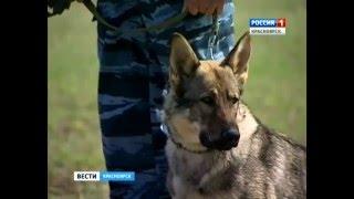 Полицейские собаки прошли спецподготовку для кинологической службы