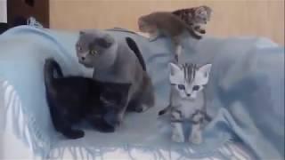 котятам 1,5 месяца