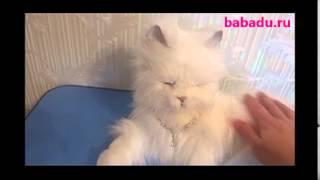 Лежачая кошка Лулу Hasbro (Хасбро)