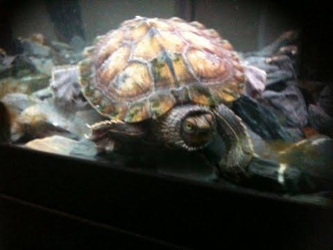 My turtle aquarium perfect start up setup - YouTube