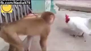 Смешные обезьяны Приколы про обезьян