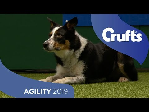 Agility Championship Round 1 – Jumping - Large | Crufts 2019