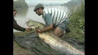 Erfolgreich angeln auf Wels