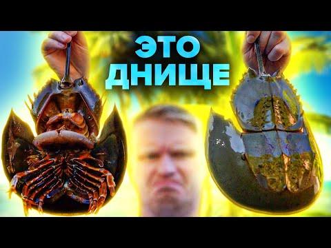 Ваш морепродукт - Г@ВНО!