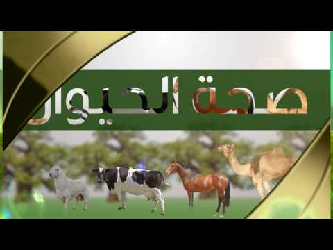 LESP - Trailer for TV Program about LESP on Sudanese Knowledge TV