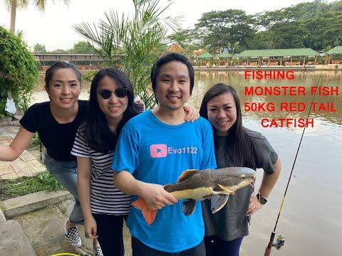CEWE CANTIK MANCING MONSTER FISH!!! DAPET RTC 1,5 METER!!!