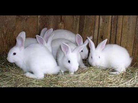 mô hình nuôi thỏ