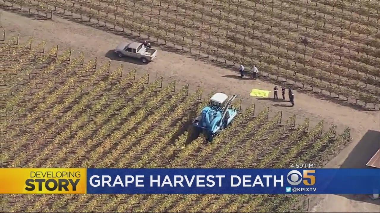 Napa Vineyard Worker Killed By Grape-Harvesting Machine