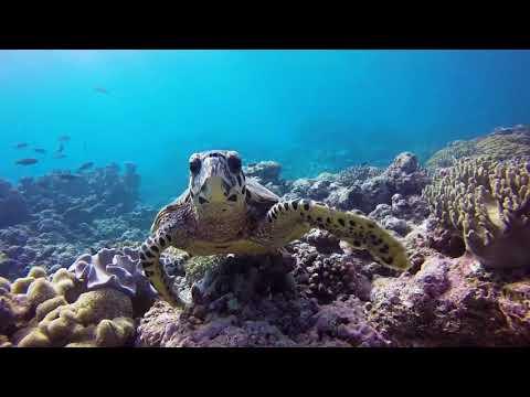"""""""Ondulation"""" : Festival de l'image sous-marine de Nouvelle-Calédonie"""