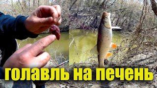Рыбалка на реке донкой на печень мимо которой голавль мимо не пройдет Активный клев в конце апреля