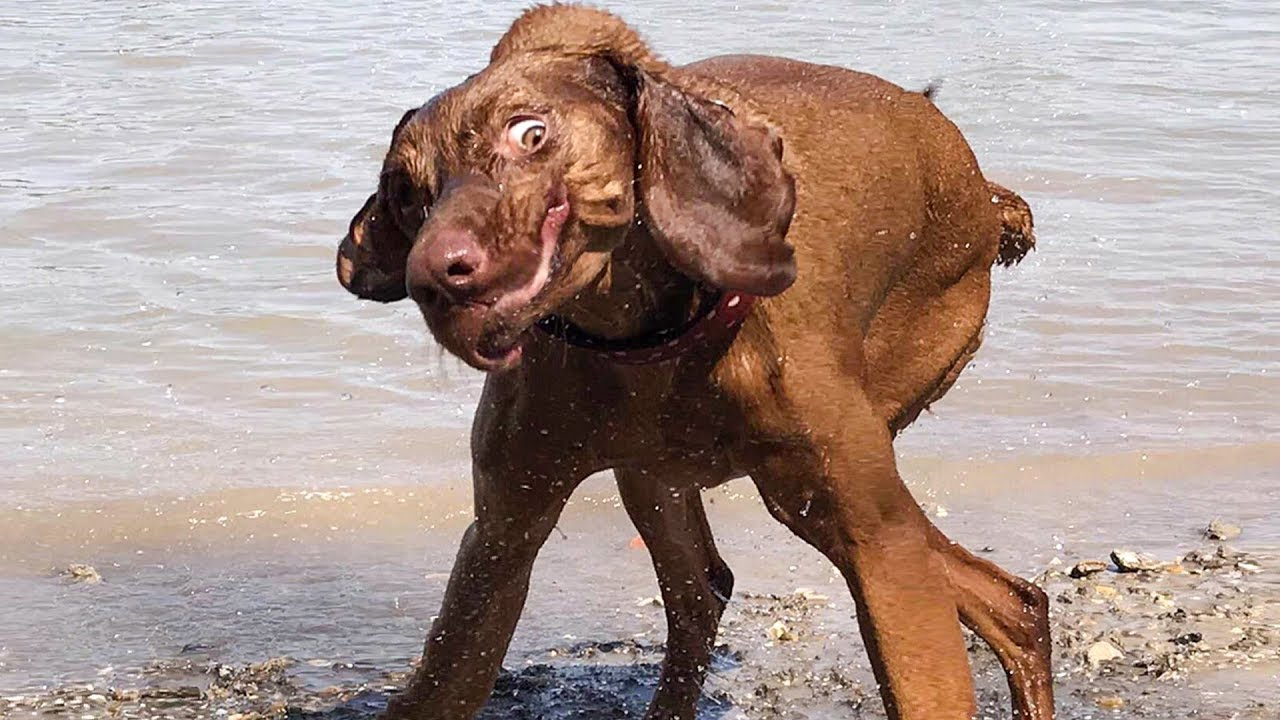 Funniest 🐶 Dogs and 😻 Cats - Awesome Funny Pet Animals ...