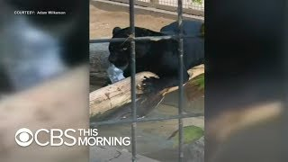 "Jaguar zoo attack: Woman says it was a ""crazy accident"""