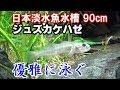 ジュズカケハゼの水槽飼育【日本淡水魚水槽90cm#21】