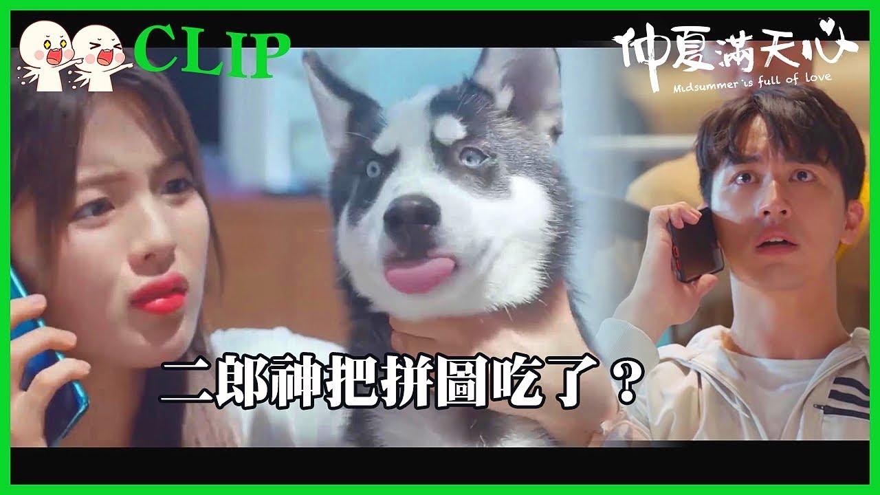 「仲夏滿天心」CLIP 笑死!借拼圖表白誰知被狗狗吃掉?