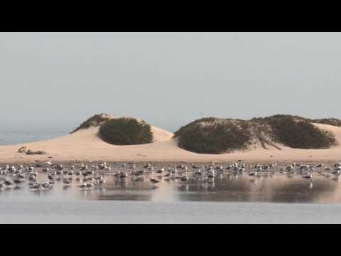 Expedition Al-Awam 2016: Biodiversity