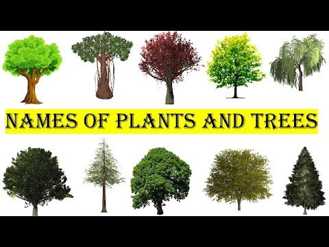 75 Trees And Plants Names In English
